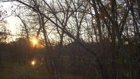 Ο ήλιος τρέμει πίσω από τους κλάδους των δέντρων, δάσος φθινοπώρου ε στο ηλιοβασίλεμα, λίμνη στο δάσος φιλμ μικρού μήκους