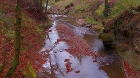 Ο ήρεμος ποταμός ρέει σε ένα όμορφο δάσος φθινοπώρου απόθεμα βίντεο