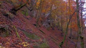 Ο ήρεμος ποταμός ρέει σε ένα όμορφο δάσος φθινοπώρου φιλμ μικρού μήκους
