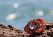 Ο ήχος της θάλασσας Στοκ φωτογραφία με δικαίωμα ελεύθερης χρήσης