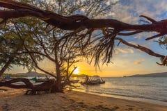 Ο ήλιος λάμπει μέσω του δέντρου πεύκων Στοκ Φωτογραφίες