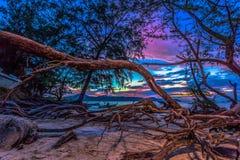 Ο ήλιος λάμπει μέσω του δέντρου πεύκων Στοκ Εικόνα