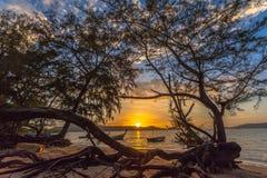 Ο ήλιος λάμπει μέσω του δέντρου πεύκων Στοκ εικόνα με δικαίωμα ελεύθερης χρήσης