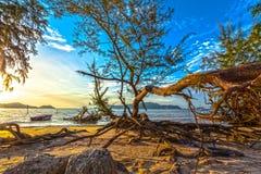 Ο ήλιος λάμπει μέσω του δέντρου πεύκων Στοκ Φωτογραφία