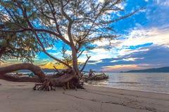 Ο ήλιος λάμπει μέσω του δέντρου πεύκων Στοκ φωτογραφία με δικαίωμα ελεύθερης χρήσης