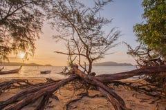 Ο ήλιος λάμπει μέσω του δέντρου πεύκων Στοκ εικόνες με δικαίωμα ελεύθερης χρήσης