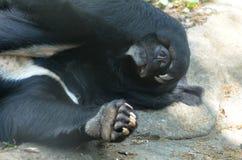 Ο ήλιος αντέχει Peekaboo με το πόδι του πέρα από τα μάτια του στοκ εικόνα με δικαίωμα ελεύθερης χρήσης
