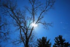 Ο ήλιος κοιτάζει αδιάκριτα αν και οι κλάδοι ενός δρύινου δέντρου αργά χειμερινό στο απόγευμα Στοκ Εικόνες