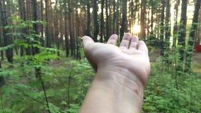 Ο ήλιος μέσω του χεριού απόθεμα βίντεο
