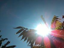 Ο ήλιος πίσω από τα φύλλα Στοκ φωτογραφία με δικαίωμα ελεύθερης χρήσης