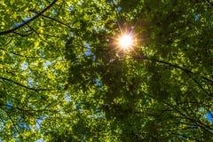 Ο ήλιος που λάμπει μέσω του πρασίνου βγάζει φύλλα Στοκ φωτογραφία με δικαίωμα ελεύθερης χρήσης