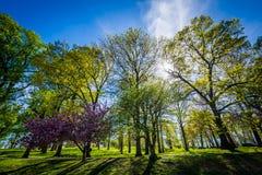 Ο ήλιος που λάμπει μέσω των δέντρων Druid στο πάρκο Hill, στη Βαλτιμόρη, στοκ εικόνα