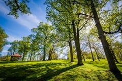 Ο ήλιος που λάμπει μέσω των δέντρων Druid στο πάρκο Hill, στη Βαλτιμόρη, στοκ φωτογραφία