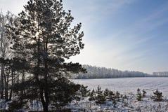 Ήλιος στους κλάδους Στοκ εικόνες με δικαίωμα ελεύθερης χρήσης