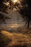 Ο ήλιος πρωινού σε πιό forrest Στοκ φωτογραφίες με δικαίωμα ελεύθερης χρήσης