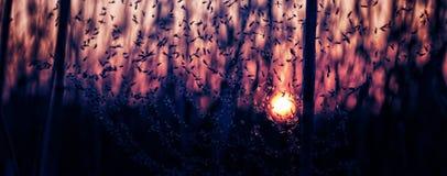 Ο ήλιος ρύθμισης και η χλόη Στοκ φωτογραφίες με δικαίωμα ελεύθερης χρήσης