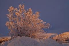 Ο ήλιος Στοκ Εικόνες
