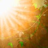 Ο ήλιος Sunrays αντιπροσωπεύει το καλοκαίρι ηλιακό και την ανθοδέσμη ελεύθερη απεικόνιση δικαιώματος