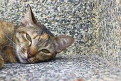 Ο λίγος τιγρέ ύπνος κοιτάζει επίμονα Στοκ φωτογραφία με δικαίωμα ελεύθερης χρήσης