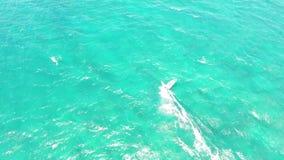 Ολίσθηση Windsurfer που κάνει σερφ κατά την ήρεμη βαθιά μπλε τυρκουάζ ωκεάνια κυμάτων τοπ εναέρια άποψη δραστηριότητας θερινού αθ φιλμ μικρού μήκους