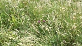 Ο αέρας φροντίζει άγρια λουλούδια στο θερινό τομέα την ηλιόλουστη ημέρα απόθεμα βίντεο