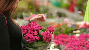 Ο αγοραστής επιλέγει τα σε δοχείο λουλούδια στο κατάστημα φιλμ μικρού μήκους