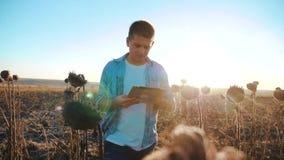 Ο αγρότης ατόμων με την ταμπλέτα στον ηλίανθο απασχολείται στον τομέα πηγαίνει έδαφος εδαφολογικών περιπάτων Σε αργή κίνηση βίντε φιλμ μικρού μήκους