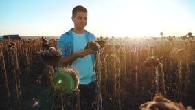 Ο αγρότης ατόμων με την ταμπλέτα στον ηλίανθο απασχολείται στον τομέα πηγαίνει έδαφος εδαφολογικών περιπάτων steadicam σε αργή κί απόθεμα βίντεο
