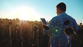 Ο αγρότης ατόμων με την ταμπλέτα στον ηλίανθο απασχολείται στον τομέα πηγαίνει έδαφος εδαφολογικών περιπάτων Σε αργή κίνηση βίντε απόθεμα βίντεο