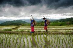 ο αγρότης στα πεζούλια ρυζιού papongpians το chiangmai Ταϊλάνδη Στοκ Εικόνα