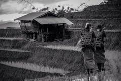 ο αγρότης στα πεζούλια ρυζιού papongpians το chiangmai Ταϊλάνδη Στοκ Εικόνες
