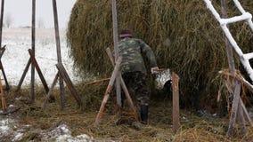 Ο αγρότης συλλέγει τα δέματα σανού μετά από τη φόρτωση στο κάρρο απόθεμα βίντεο