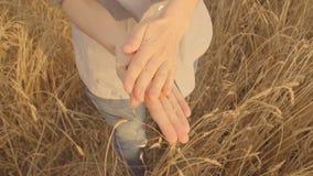 Ο αγρότης χεριών γυναικών ` s εξετάζει τη συγκομιδή του σίτου χρυσός σίτος πεδίων Φως του ήλιου αργός φιλμ μικρού μήκους