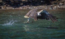 Ο αετός Στοκ εικόνα με δικαίωμα ελεύθερης χρήσης