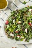 Ο ακατέργαστοι υγιείς οργανικοί Kale και σαλάτα της Apple Στοκ Εικόνα