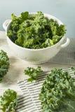 Ο ακατέργαστος πράσινος οργανικός σγουρός Kale Στοκ φωτογραφία με δικαίωμα ελεύθερης χρήσης