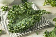 Ο ακατέργαστος πράσινος οργανικός σγουρός Kale Στοκ εικόνα με δικαίωμα ελεύθερης χρήσης