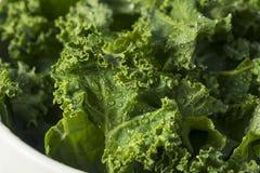 Ο ακατέργαστος πράσινος οργανικός σγουρός Kale Στοκ Φωτογραφίες