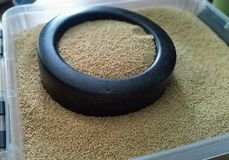 Ο αμάραντος είναι ευεργετικοί σπόροι που συσχετίζονται με Quinoa στοκ εικόνες
