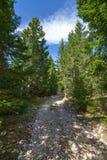 Ο αμμοχάλικο-δρόμος στο κομψό δάσος στοκ φωτογραφία