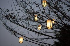 Ο λαμπτήρας δαντελλών στο δέντρο στο υπόβαθρο νύχτας Στοκ φωτογραφία με δικαίωμα ελεύθερης χρήσης