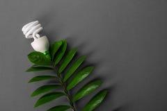 Ο λαμπτήρας των οδηγήσεων με το πράσινο φύλλο, ενεργειακή έννοια ECO, κλείνει επάνω γκρίζο φως βολβών ανασκόπ& Διάσωση και οικολο Στοκ Εικόνα