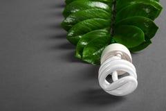 Ο λαμπτήρας των οδηγήσεων με το πράσινο φύλλο, ενεργειακή έννοια ECO, κλείνει επάνω γκρίζο φως βολβών ανασκόπ& Διάσωση και οικολο Στοκ Εικόνες