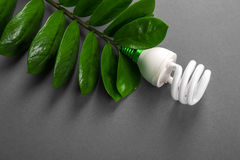 Ο λαμπτήρας των οδηγήσεων με το πράσινο φύλλο, ενεργειακή έννοια ECO, κλείνει επάνω γκρίζο φως βολβών ανασκόπ& Διάσωση και οικολο Στοκ Φωτογραφίες
