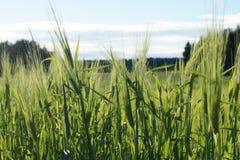Ο αναγκαίος αγρότης Στοκ Εικόνες