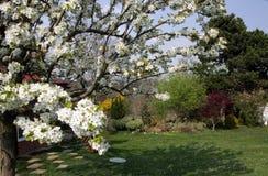 Ο ανθίζοντας κήπος άνοιξη με τα δέντρα και η χλόη στοκ εικόνα