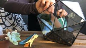 Ο ανθοκόμος γυναικών χύνει ένα χώμα σε ένα γεωμετρικό terrarium γυαλιού Μπροστινή όψη Κινηματογράφηση σε πρώτο πλάνο απόθεμα βίντεο