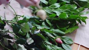 Ο ανθοκόμος κανονίζει τα τριαντάφυλλα για τα πράσινα για να δημιουργήσει μια ανθοδέσμη σε ένα ανθοπωλείο Κλείστε επάνω την όψη απόθεμα βίντεο
