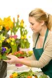 Ο ανθοκόμος τακτοποιεί τα λουλούδια άνοιξη ζωηρόχρωμα Στοκ φωτογραφία με δικαίωμα ελεύθερης χρήσης