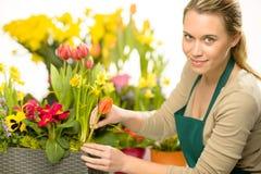 Ο ανθοκόμος τακτοποιεί τις ζωηρόχρωμες εγκαταστάσεις λουλουδιών άνοιξη Στοκ Εικόνες